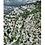Thumbnail: Toulon - Faron