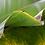 Thumbnail: Génie créateur (bananier)