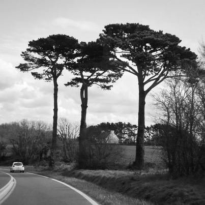 Route de Tregana (Tregana road)