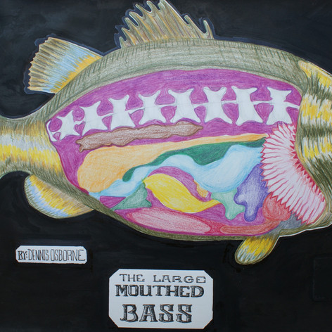 Largemouth Bass Anatomical Drawing
