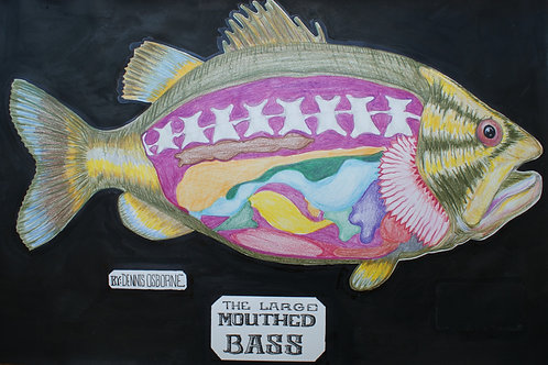 Original Largemouth Bass Anatomical Drawing