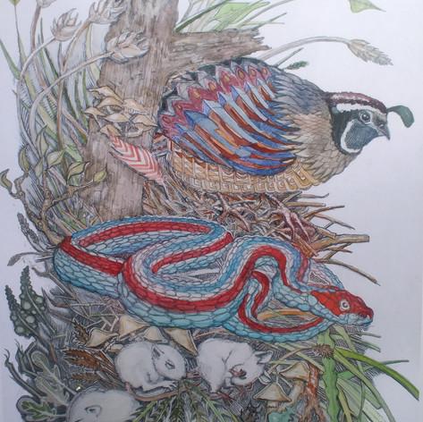 quailandsfgarter.jpg