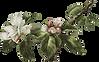 botanical_0016_4.png