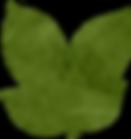 botanical_0012_x.png