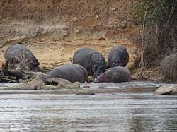 Safari Holidays
