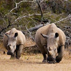 African Safari Experience