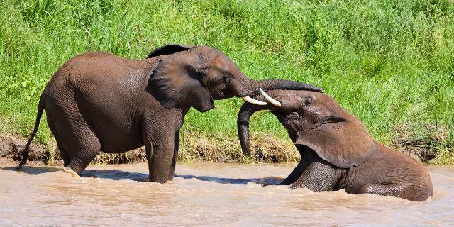 Elephant_Header (640x320).jpg