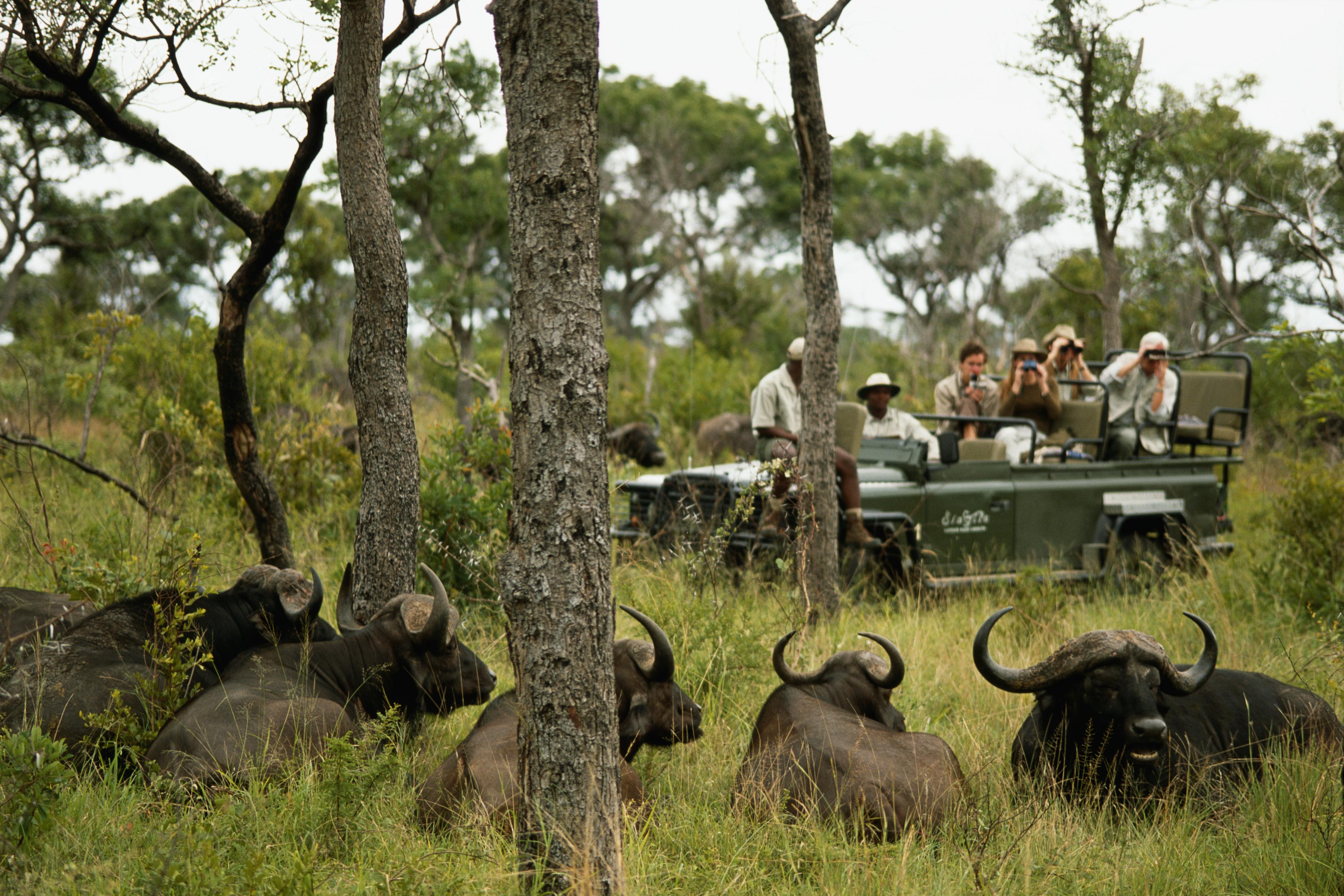 Best African Safari