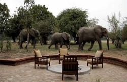 Luxury Safari Holidays