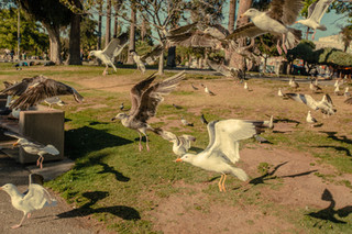 MacArthur Park, LA