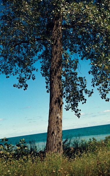 Lake Michigan, IL