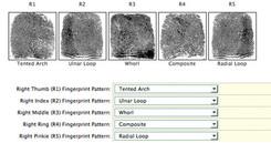 Fingerprints chart