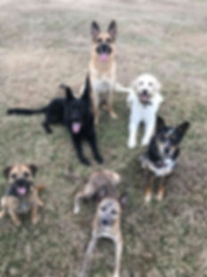 Teach Your K9 Group of Dogs
