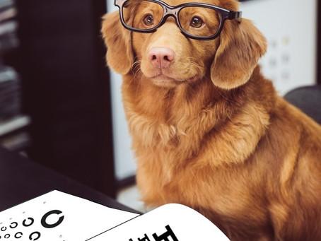 Optometry Humour...Cheesy, yet Relatable...