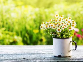 Ayurveda & Spring Cleansing