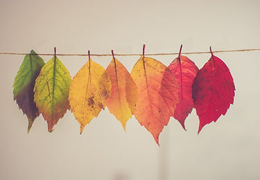 transition_to_fall_with_ayurveda-photo-c