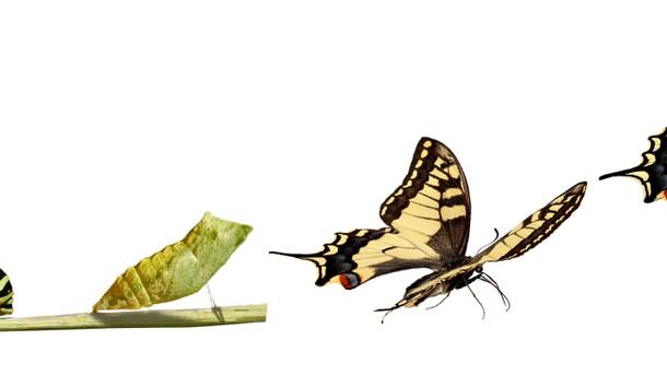 Alışkanlıklar ve Kişisel Dönüşüm