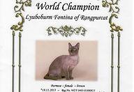 Диплом Чемпион Мира WСF бурманская кошка