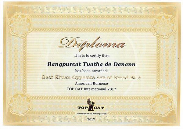 best of breed certificate (2017) Туата