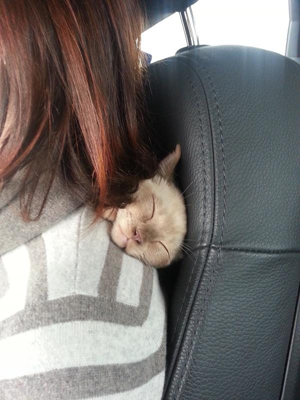 Бурма в автомобиле