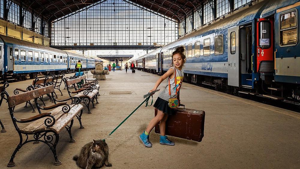 Поездка с кошкой