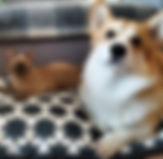 Бурма и собака