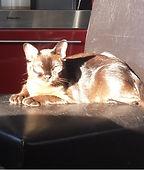 кошка в автомобиле