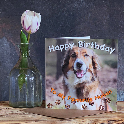 To my favourite human from the Dog - Birthday card