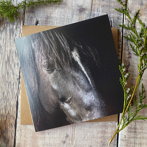 EGC0 Horse Portrait Greeting card