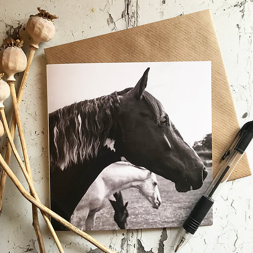 Eating, Sleeping, Watching, Horse Greeting Card