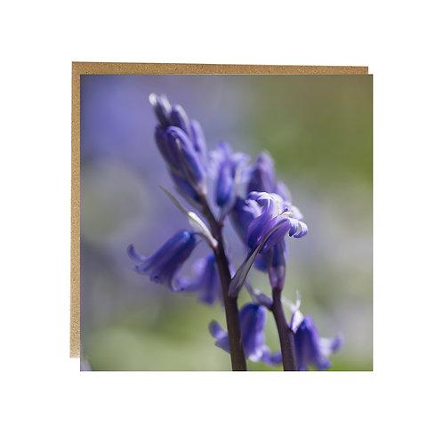 Bluebell flower greeting card