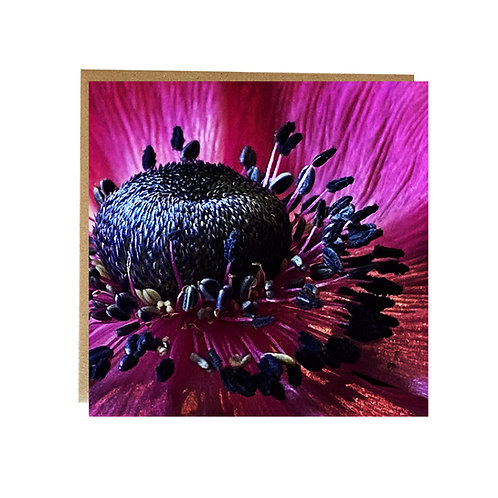 Pink Anemone close up greeting card