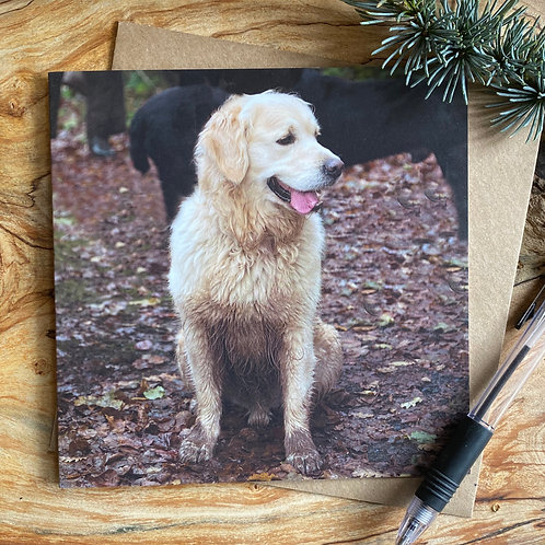 Mud - no I haven't seen any mud - Retriever Card
