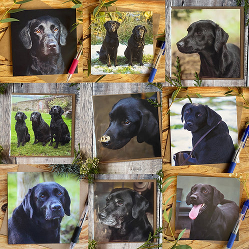 Pack of 9 Black Labrador greeting Cards