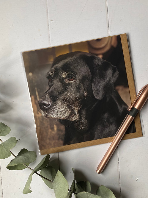 Old Black Lab - DBC