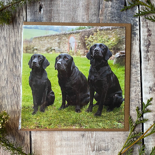 Three Black Labs sitting in a row- Greeting Card