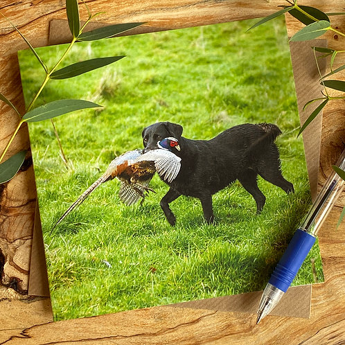 Black Lab working dog - card