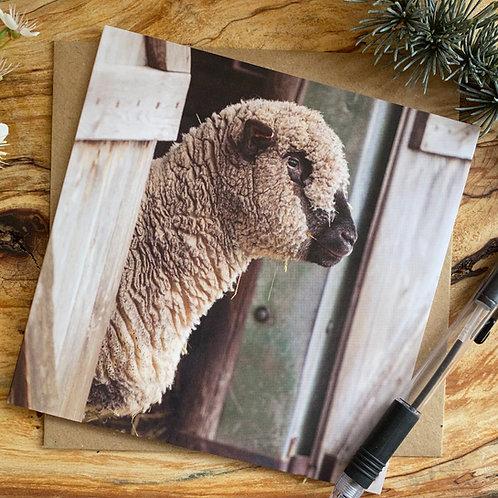 SheepGreeting Card