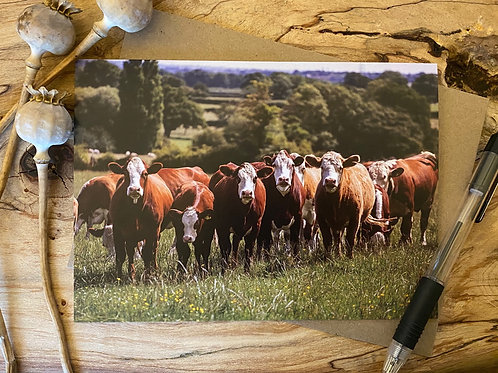 Herefordshire cows greeting card