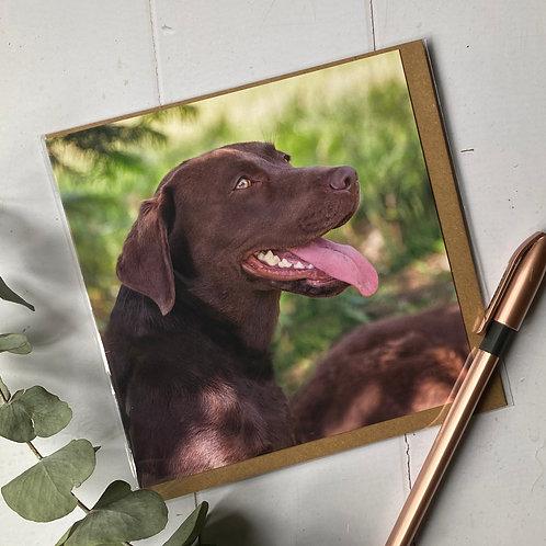 DBC Beautiful Chocolate Brown Labrador Greeting card