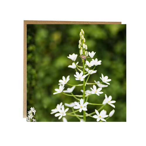 Busy Bee on this pretty white flower Greeting Card