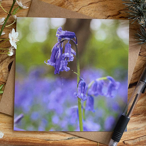 WB016 Bluebell woods greeting card