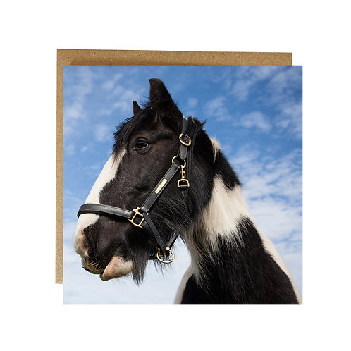 Horse on blue sky Greeting Card