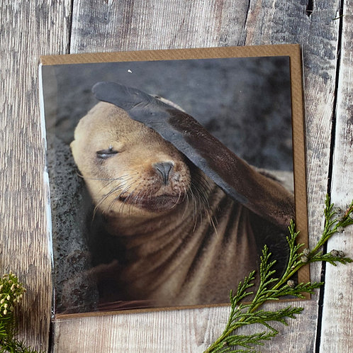 Galapagos Sealion Greeting Card