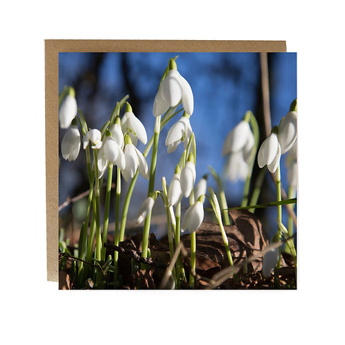 Snowdrops and Blue skies Greeting Card