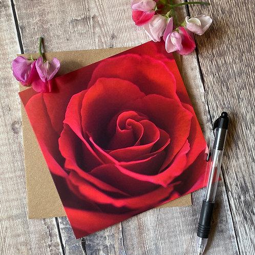 FC013 Red Rose Greeting Card