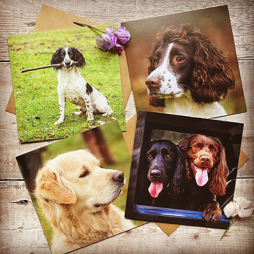 Pack of 4 Dog Greeting Cards