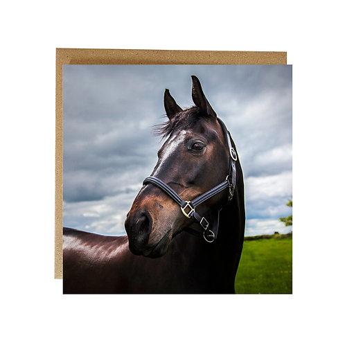 Stunning Horse Portrait Greeting card