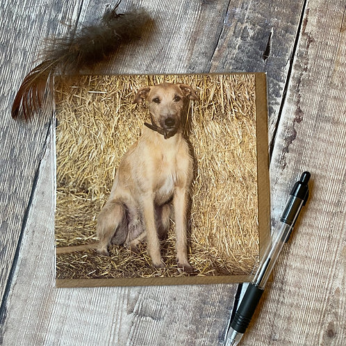 Lurcher pup Greeting Card