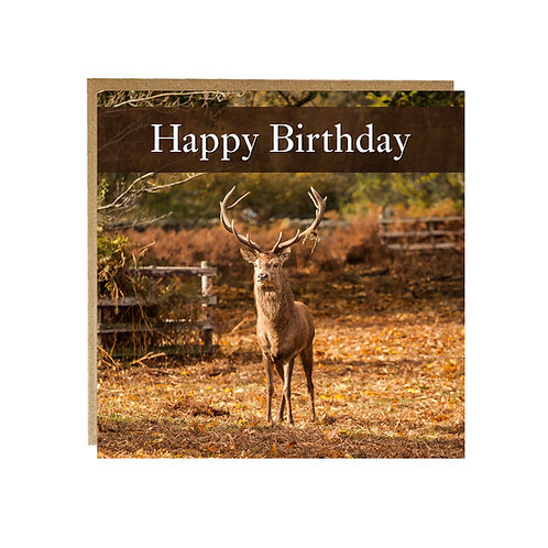 Birthday card with lovely Red Stag in Autumnal setting